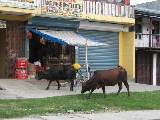 Непал, ОАЭ и ОМАН