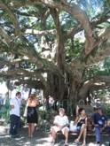 Санта-Катарина: ласковые курорты с бразильской спецификой