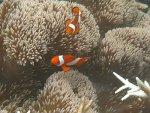 Индонезийский архипелаг Раджа Ампат: Самое лучшее в мире место для дайвинга