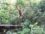 Индонезийско-малайзийско-брунейский остров чудес природы