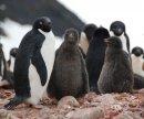 Неприступная красота Антарктики