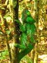 Мадагаскар – заповедный остров хамелеонов и лемуров – часть 3