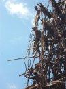 Прыжки на эластичном тросе – многовековой обычай – часть 2