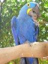 Фотоохота в бразильском птичьем питомнике – часть 3