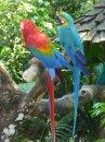 Фотоохота в бразильском птичьем питомнике – часть 1