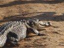 Кормление крокодилов и катание на лошадях – часть 2