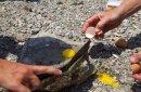 В Калифорнию понаехали любители омлета